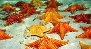 StarfishColony